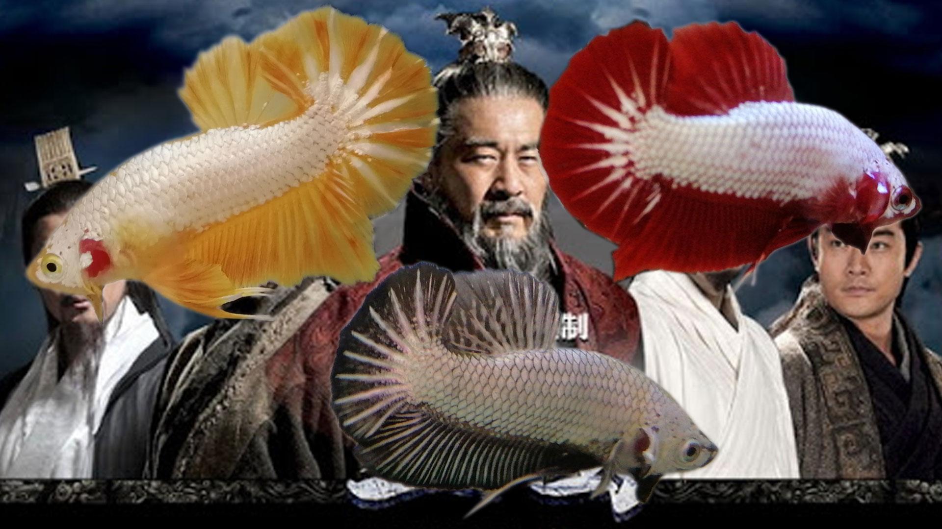 3 mẫu cá betta rồng huyền thoại hiện nay
