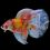 ca-betta-253-vip-halfmoon-galaxy-nemo (1)