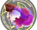 logo-betta-the-end-sao