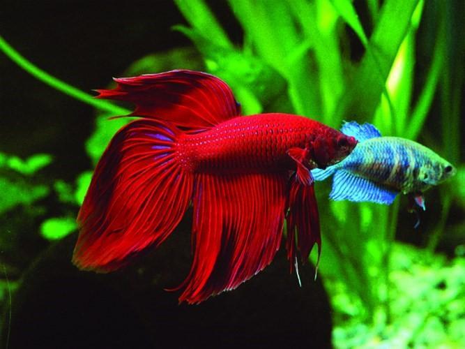 Vây cá và màu sắc cá